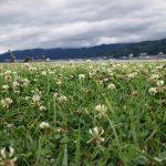 「諏訪湖で朝活。太極拳」2018年7回目行えました