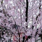 明後日、4月4日(土)から「諏訪湖で朝活。太極拳」2020.スタートします
