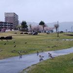 「諏訪湖で朝活。太極拳」2020年2回目は雨で中止でした